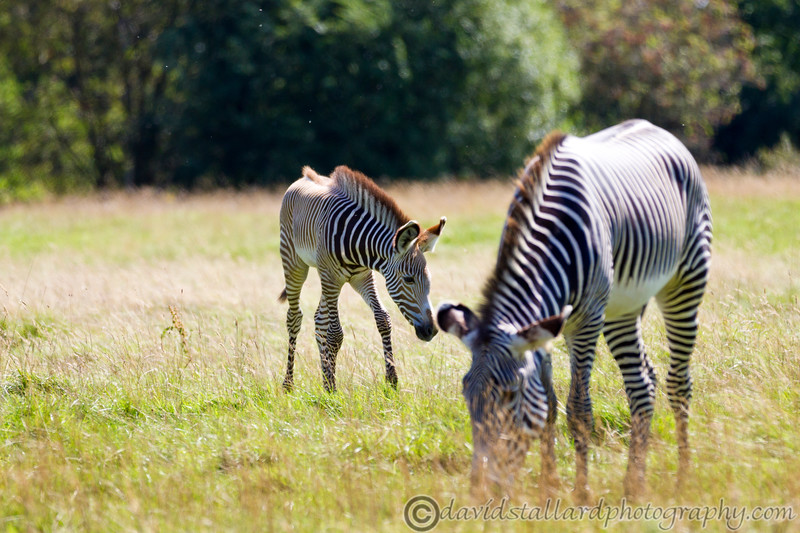 Whipsnade Zoo 18-08-12  020