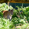 Whipsnade Zoo 18-08-12  002