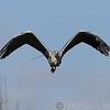 BWC Heron head on