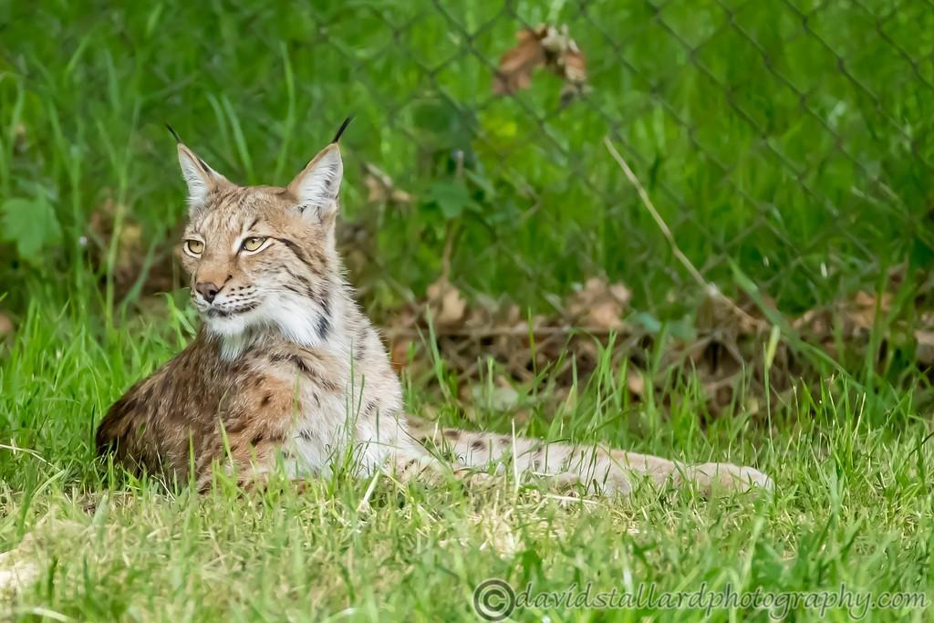 IMAGE: https://photos.smugmug.com/Animals/Zoos/Wild-at-Heart/i-XFk6nwT/0/5a38462c/XL/Whipsnade%2001-06-19%200033-XL.jpg