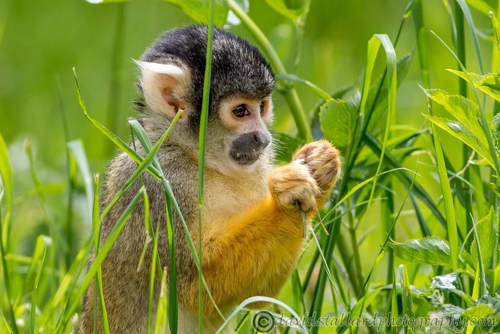 IMAGE: https://photos.smugmug.com/Animals/Zoos/Wild-at-Heart/i-bjfcRpF/0/51de6572/XL/Whipsnade%2001-06-19%200024-XL.jpg