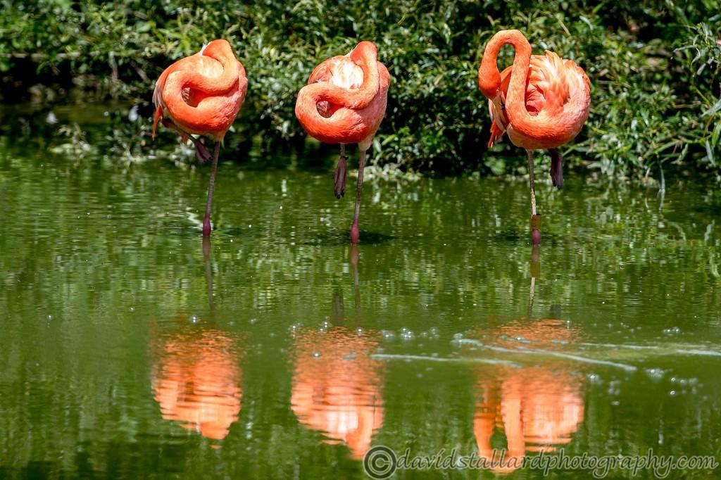 IMAGE: https://photos.smugmug.com/Animals/Zoos/Wild-at-Heart/i-hmTvH9r/0/8f055f55/XL/Whipsnade%2001-06-19%200016-XL.jpg