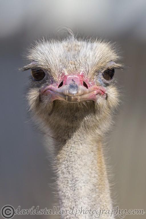 IMAGE: https://photos.smugmug.com/Animals/Zoos/Wild-at-Heart/i-vnwj6JX/0/31bd67cc/XL/04%20Colchester%20Zoo%2024-02-18-XL.jpg