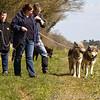 Wolf Conservation Trust 06-04-12  118