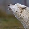 Wolf Conservation Trust 06-04-12  006