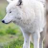 Wolf Conservation Trust 06-04-12  020