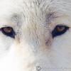 Wolf Conservation Trust 06-04-12  035