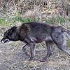 Wolf Conservation Trust 06-04-12  098
