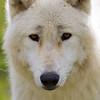 Wolf Conservation Trust 06-04-12  007
