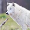 Wolf Conservation Trust 06-04-12  024