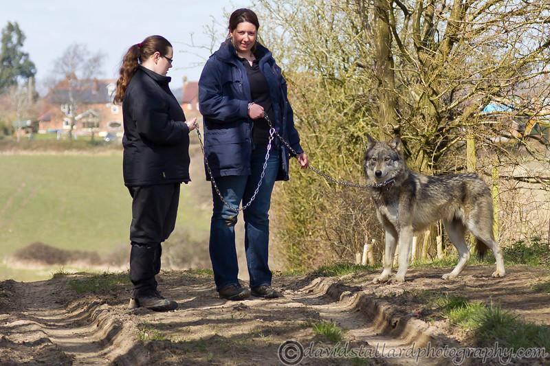 Wolf Conservation Trust 06-04-12  111