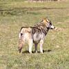 Wolf Conservation Trust 06-04-12  089