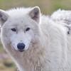 Wolf Conservation Trust 06-04-12  010