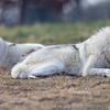 Wolf Conservation Trust 06-04-12  041