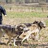 Wolf Conservation Trust 06-04-12  112