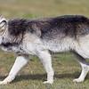 Wolf Conservation Trust 06-04-12  057