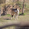 Wolf Conservation Trust 06-04-12  147