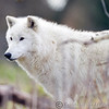 Wolf Conservation Trust 06-04-12  013