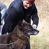 Wolf Conservation Trust 06-04-12  106