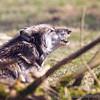 Wolf Conservation Trust 06-04-12  152