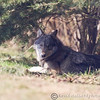 Wolf Conservation Trust 06-04-12  159