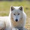 Wolf Conservation Trust 06-04-12  036