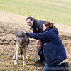 Wolf Conservation Trust 06-04-12  108