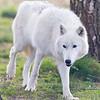 Wolf Conservation Trust 06-04-12  027