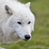 Wolf Conservation Trust 06-04-12  023