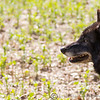 Wolf Conservation Trust 06-04-12  113