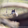 Wolf Conservation Trust 06-04-12  148