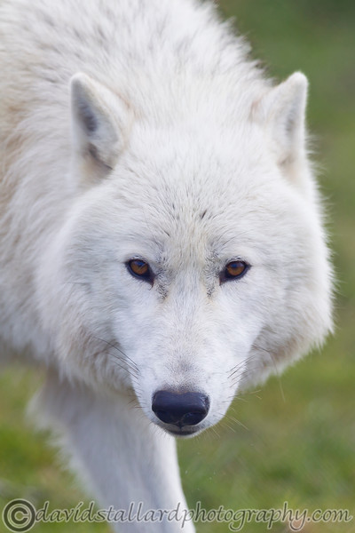 Wolf Conservation Trust 06-04-12  022