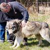 Wolf Conservation Trust 06-04-12  092