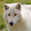 Wolf Conservation Trust 06-04-12  008