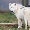 Wolf Conservation Trust 06-04-12  003
