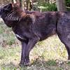Wolf Conservation Trust 06-04-12  100