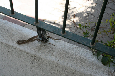 a snake on our stairs