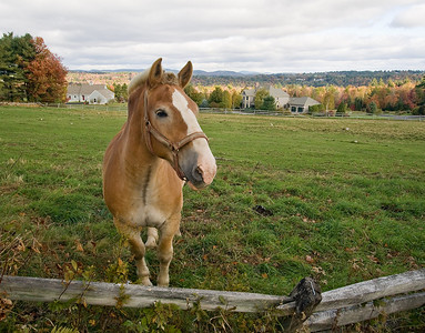 Horse in New London, New Hampshire