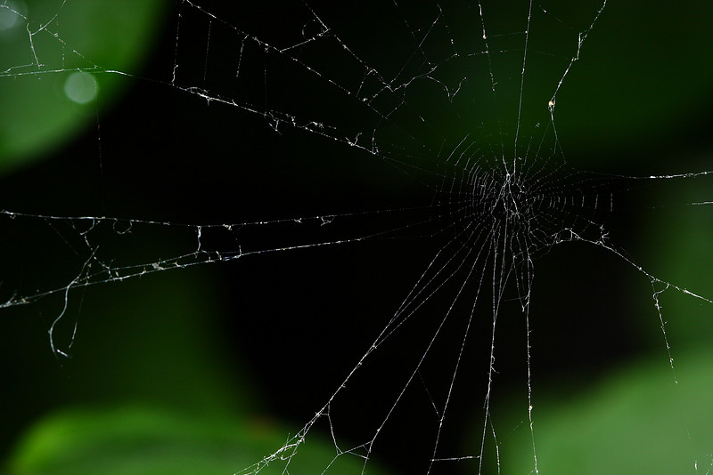 An orb weaver's damaged web.
