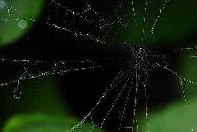 An orb weaver's damaged web.