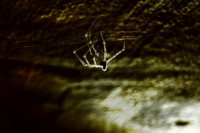 Dead Spider  Died a long time ago and covered now with mold, looks like an alien from another world    creativecommons - by-nc-nd