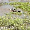 wetlands-8