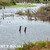 wetlands-2