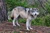 NX2_2010-05-02_081_WolfDSC_1508