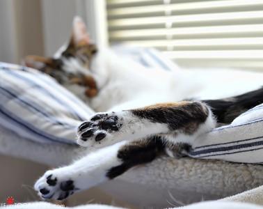 Cat Portfolio