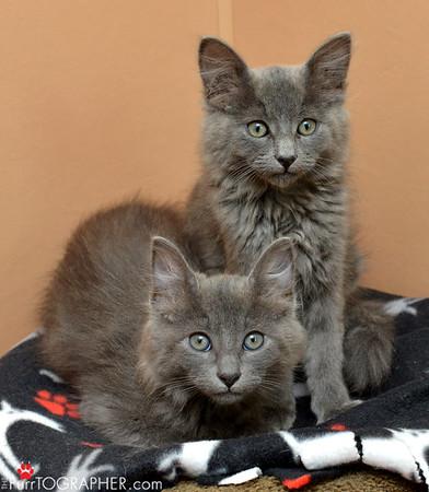 Humane Society of Silicon Valley Smugmug Cats