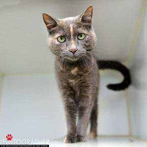 OAS cats 7-3-2018
