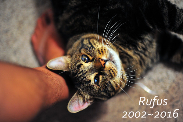 Rufus-final