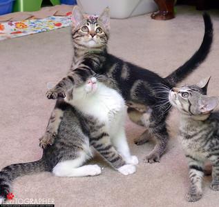 Kittens with Daniel