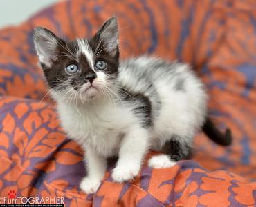Rachel's Kittens